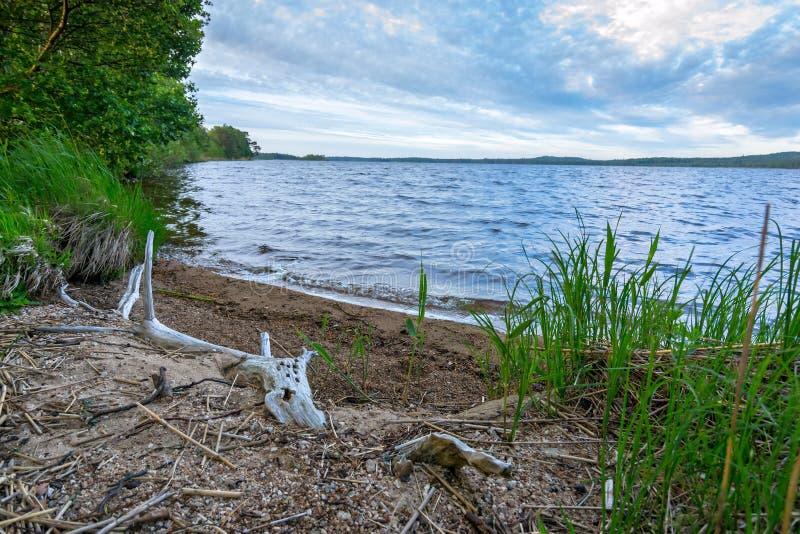 Costa del lago summer en Suecia imagen de archivo libre de regalías