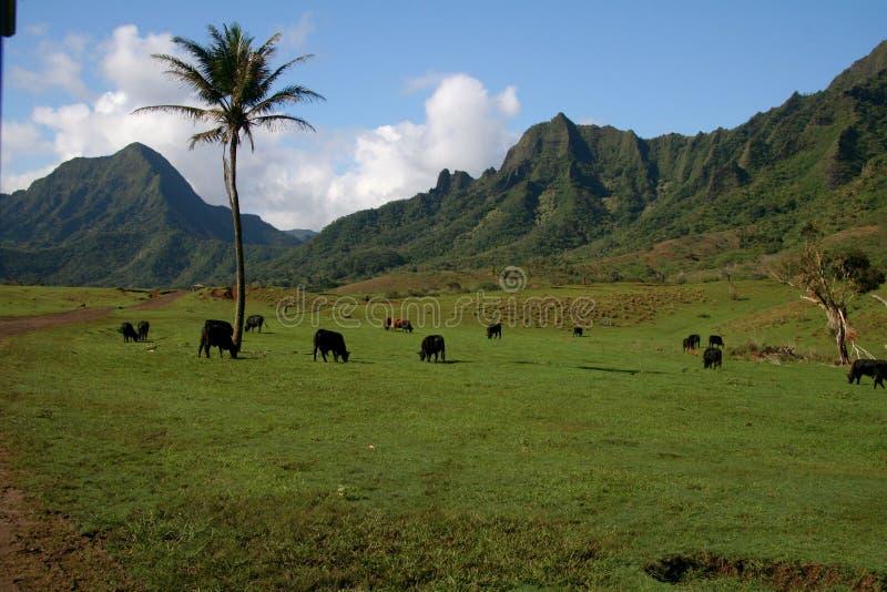 Costa del norte Oahu del rancho de Kualoa imágenes de archivo libres de regalías