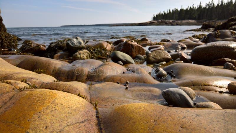 Costa del parque nacional del Acadia imagenes de archivo
