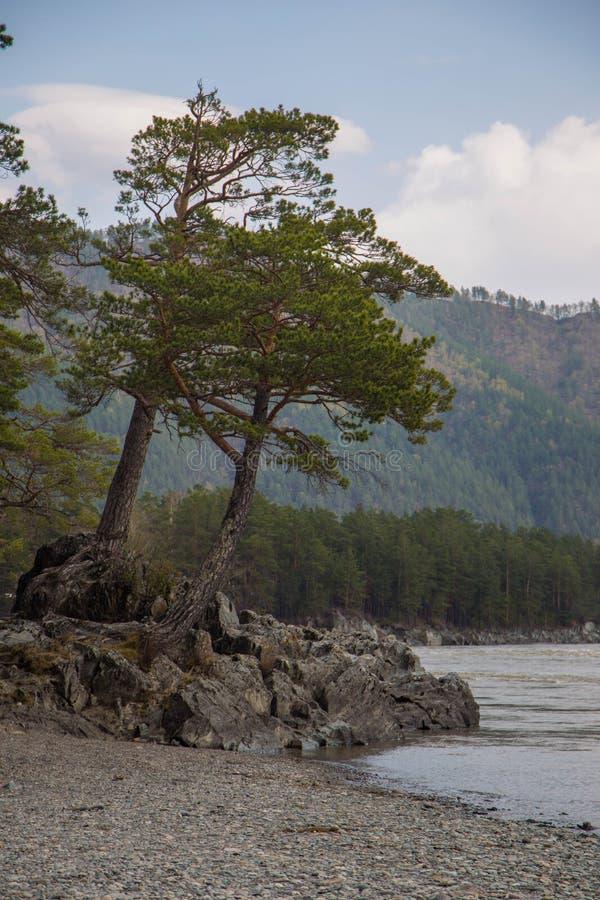 Costa del r?o de Katun en las monta?as de Altai Chemal, Altay Republic, Siberia, Rusia fotografía de archivo