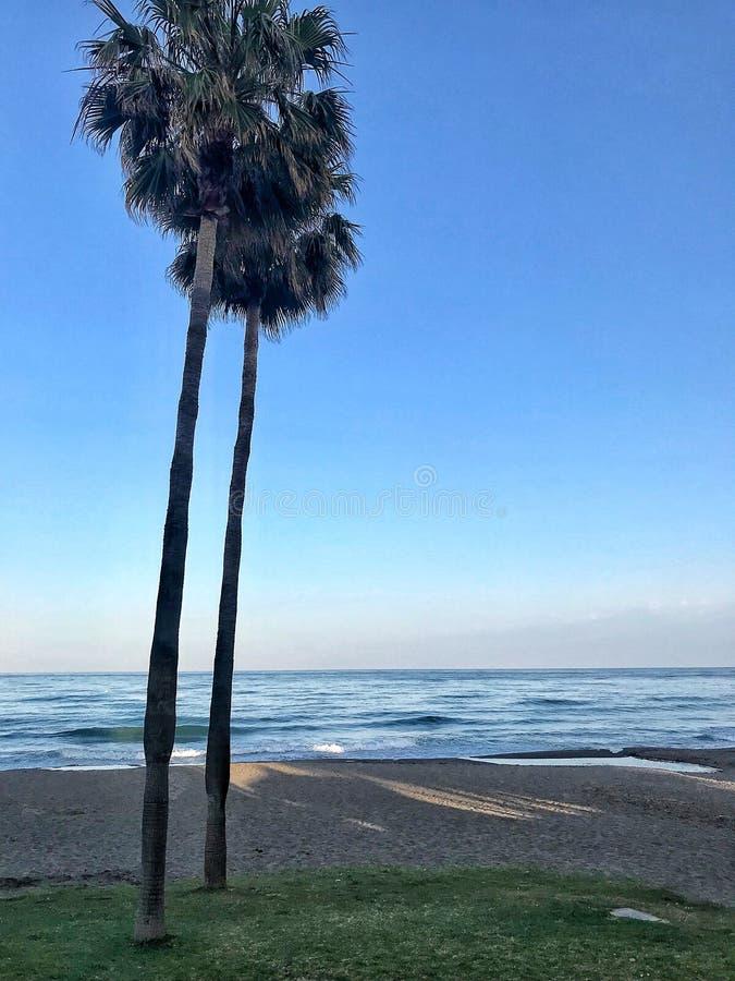 Costa del Sol, Málaga Palmeras y el mar fotografía de archivo