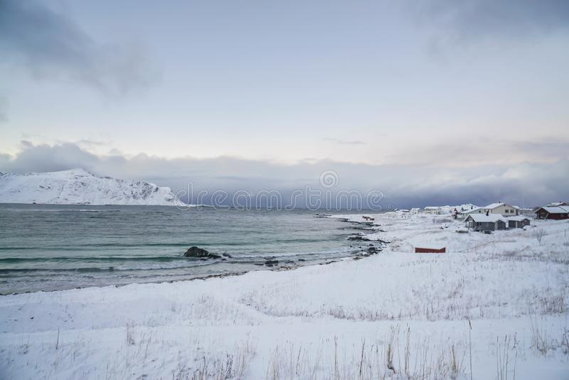 Costa dell'oceano in pieno di neve nell'inverno nell'isola Norvegia di Lofoten immagini stock libere da diritti