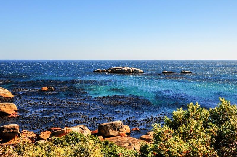 Costa di Cape Town, Sudafrica immagine stock libera da diritti