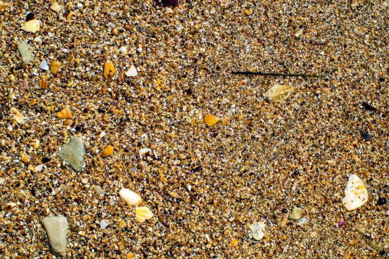 Costa di Mar Nero sparsa con le coperture giallo sabbia e piccole fotografia stock libera da diritti