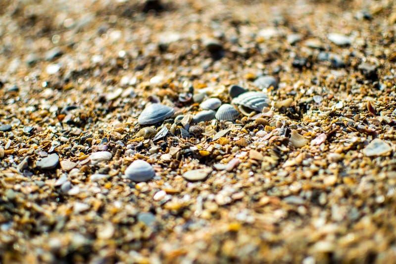 Costa di Mar Nero sparsa con le coperture giallo sabbia e piccole immagini stock libere da diritti