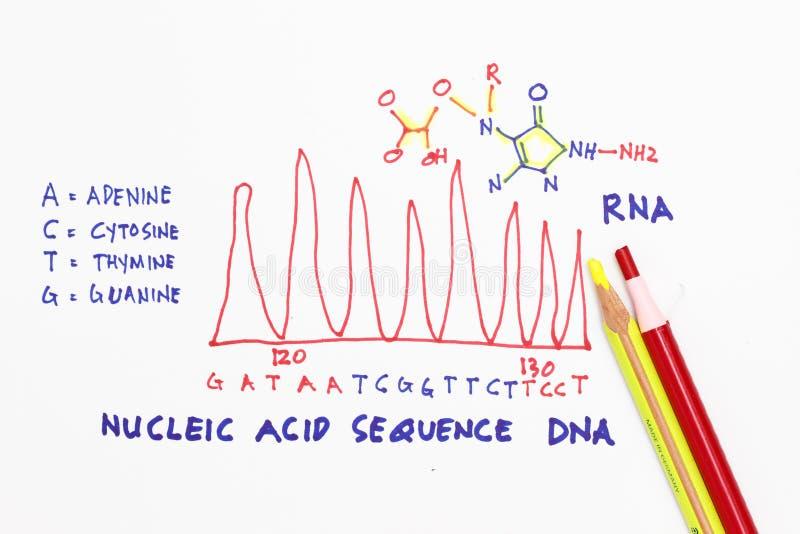 Download Costa do ADN imagem de stock. Imagem de refleta, gene - 16868509