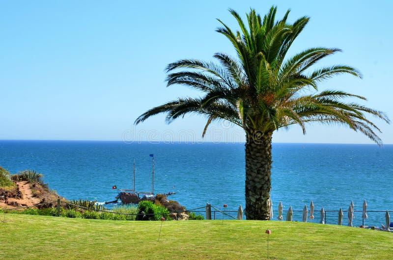 Download Costa do Algarve imagem de stock. Imagem de árvore, palma - 26517593
