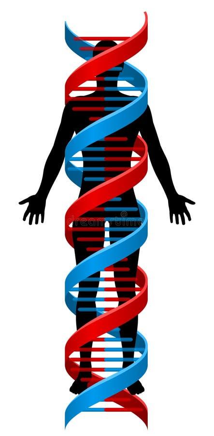 Costa do cromossoma do ADN da pessoa e da hélice dobro ilustração do vetor
