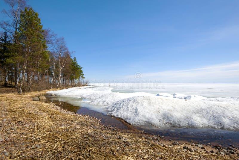 Costa do lago ladoga, dia de Sunny April Região de Leninegrado, Rússia foto de stock