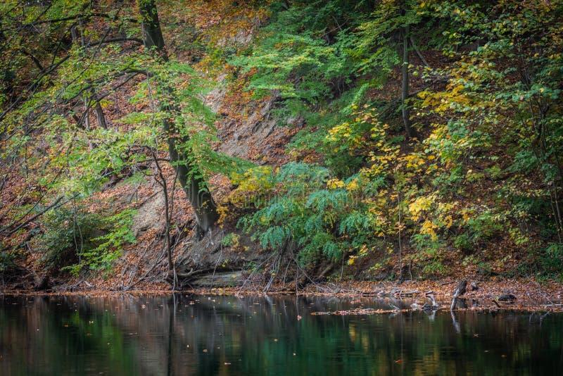 A costa do lago, do verde e do amarelo sae acima da água fotos de stock royalty free