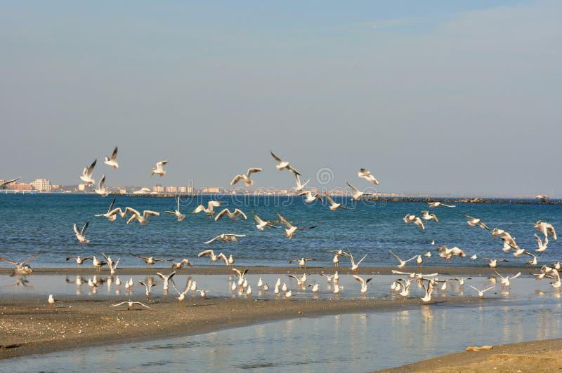 A costa do Mar Negro e a natureza, Romania imagens de stock