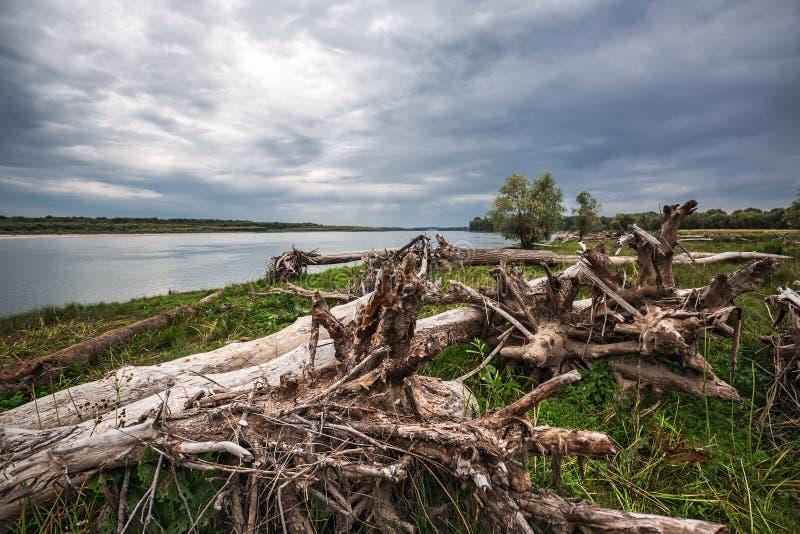 A costa do Rio Ob com senões Sibéria ocidental fotografia de stock royalty free