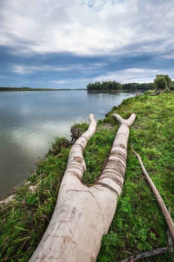 A costa do Rio Ob com senões Sibéria ocidental imagem de stock royalty free