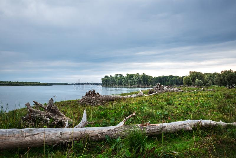 A costa do Rio Ob com senões Sibéria ocidental foto de stock royalty free