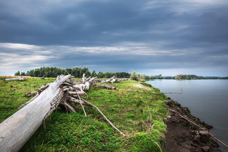 A costa do Rio Ob com senões Sibéria ocidental fotos de stock