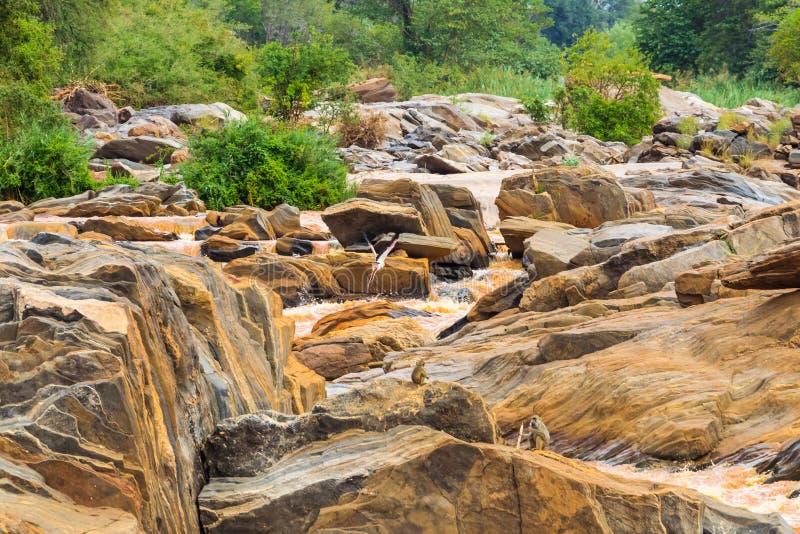 A costa do rio Tana entre os parques de Meru e Cora África foto de stock
