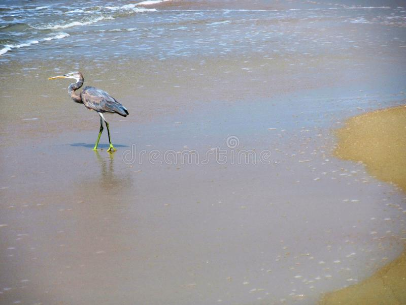 A costa e as praias de Goa imagens de stock