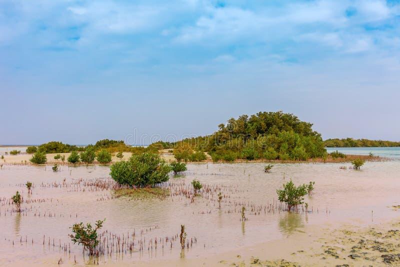 Costa e manguezais de Mar Vermelho em Ras Mohammed National Park Destionation famoso do curso no deserto Xeique do EL de Sharm, S fotos de stock