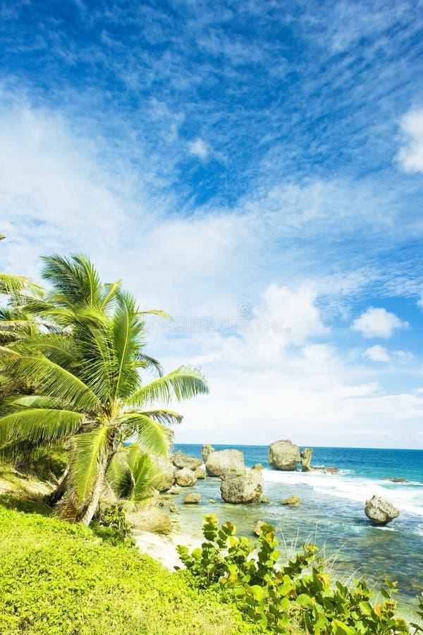 Costa este de Barbados imagen de archivo libre de regalías