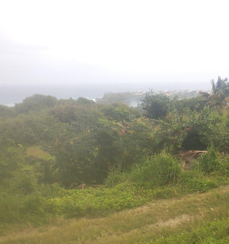 Costa este de Barbados foto de archivo
