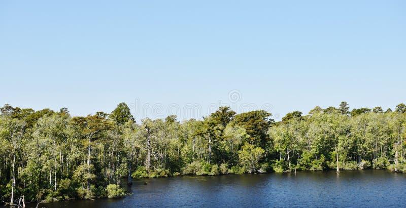 Costa gruesa de los árboles de los bancos externos de Carolina del Norte los E.E.U.U. fotografía de archivo libre de regalías