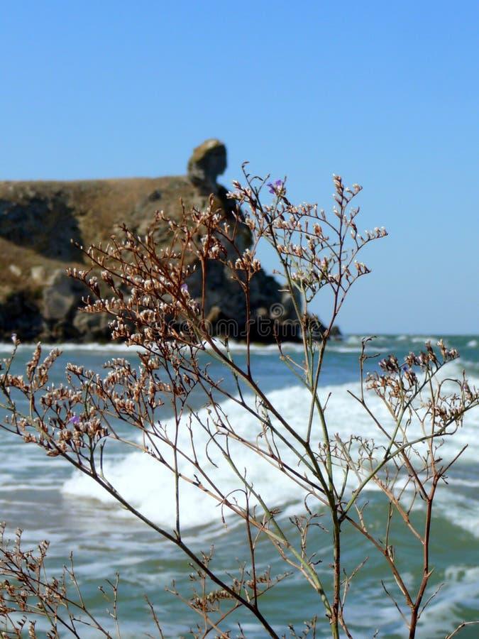 Costa hermosa del mar de Azov foto de archivo