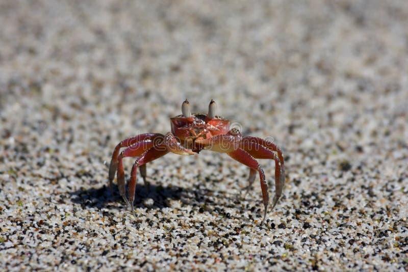 costa kraba rica zdjęcie stock