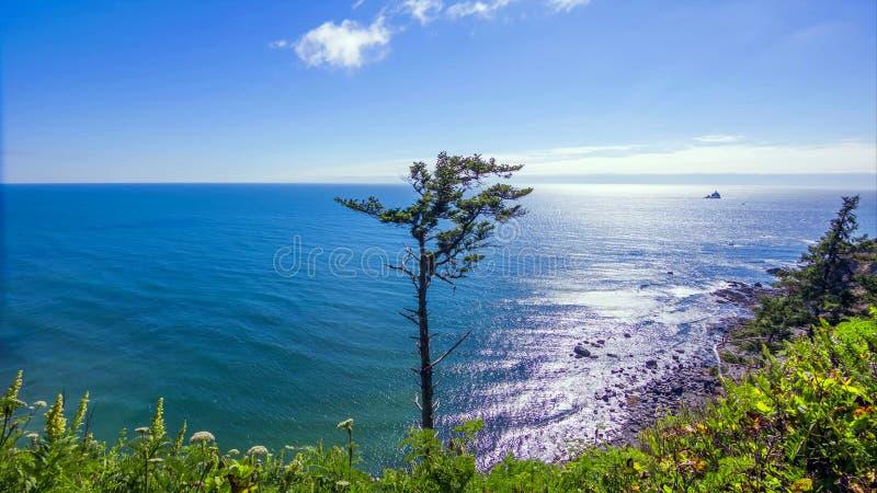 Costa noroeste pacífica, a rota de enrolamento 101 dos EUA - E.U. ao longo do litoral enevoado de Oregon perto de Yachats foto de stock royalty free