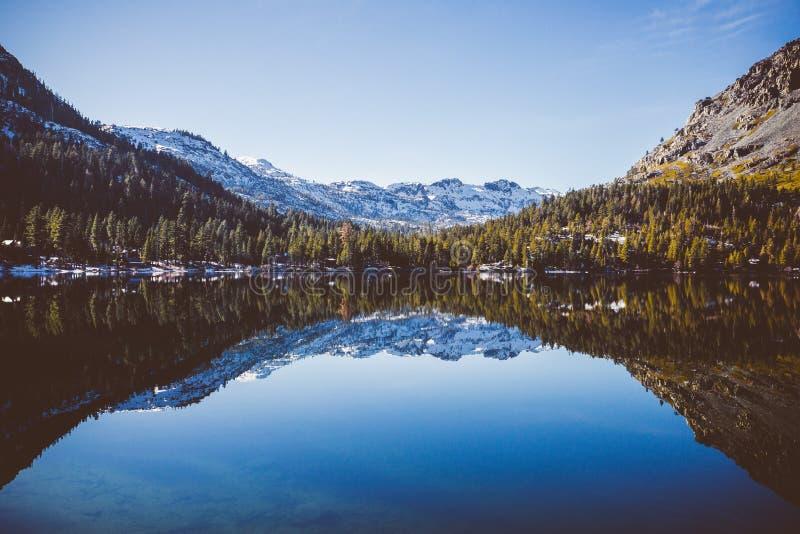 A costa ou o lago caído leaf imagem de stock