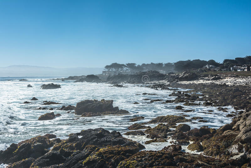 Costa pacífica do bosque, Monterey, Califórnia foto de stock