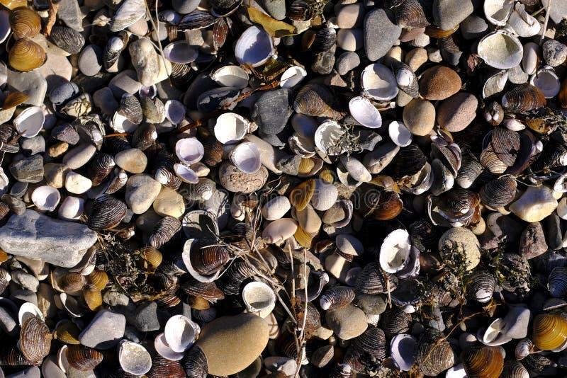Costa, praia completamente de shell do mar foto de stock royalty free