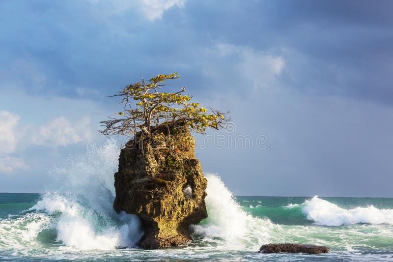 Costa in Costa Rica fotografie stock