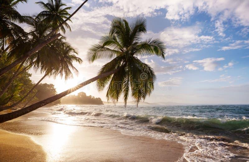 Costa in Costa Rica fotografia stock