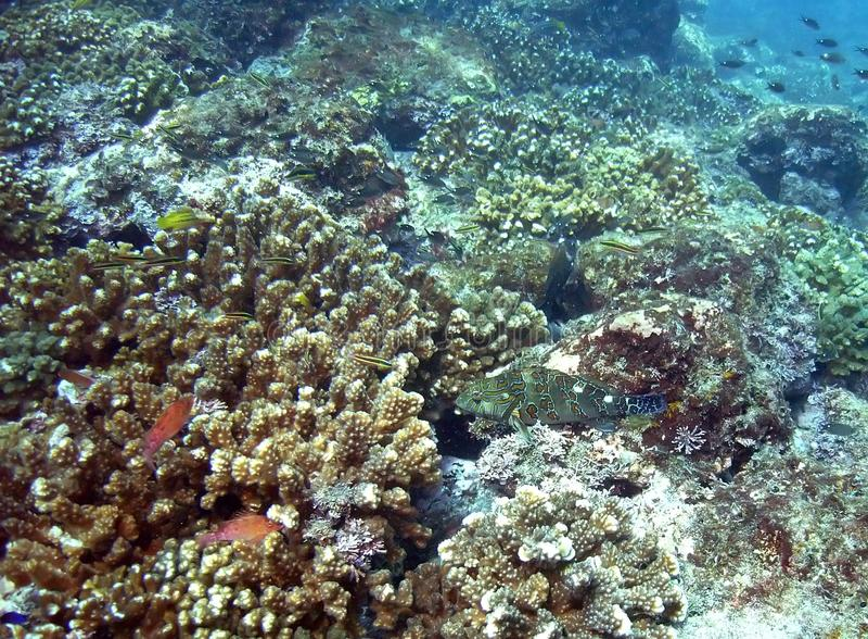Costa Rica Coral Reefs stockbild