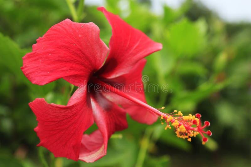 Costa Rica e natura e paesaggi del Panama Viaggio dell'America wanderlust fotografia stock libera da diritti