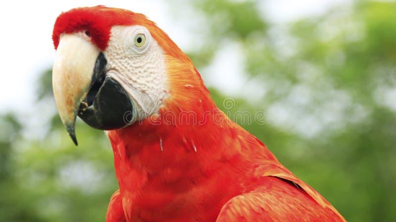 Costa Rica e natureza e paisagens de Panamá Curso de América wanderlust imagem de stock royalty free