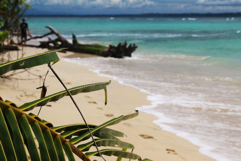 Costa Rica och Panama natur och landskap Amerika lopp wanderlust arkivbild