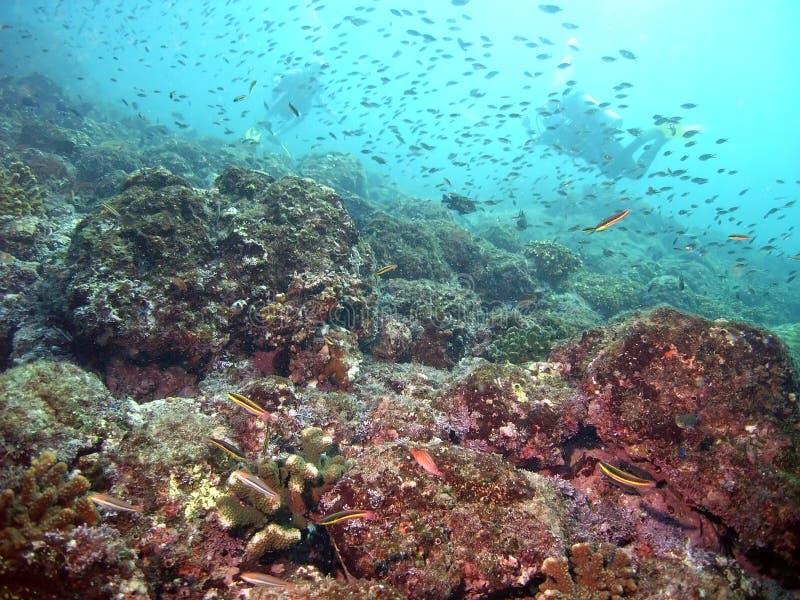 Costa Rica Vibrant Reef Life stockfoto