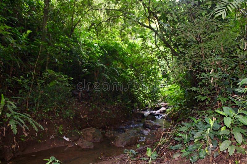 Costa Rican halny strumień w tropikalnym lesie deszczowym fotografia stock