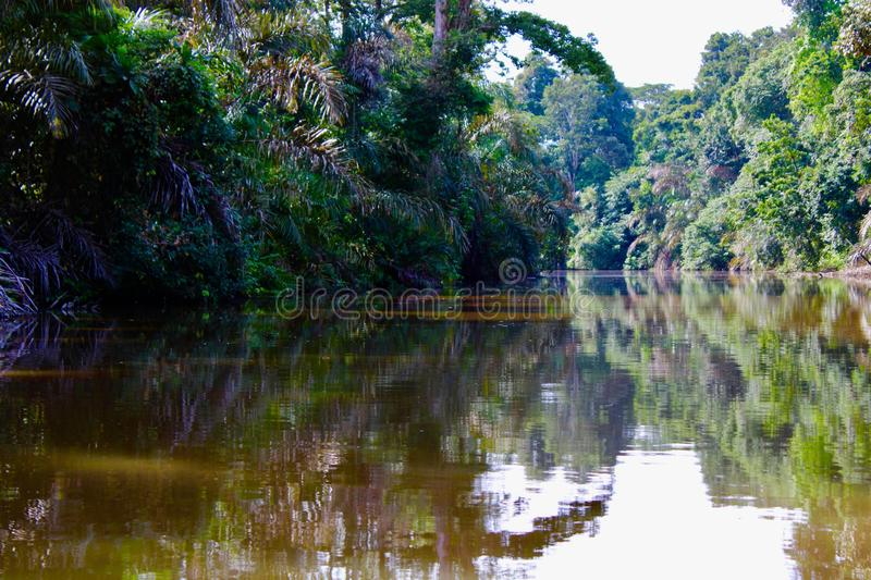 Costa Rican jungle lagoon in the Caribbean royalty free stock photos