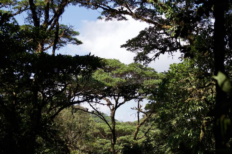Costa Rican rain forest royalty free stock photos