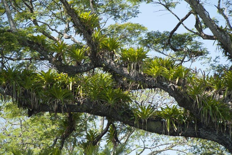 Tropical Rain Forest 3 stock photo