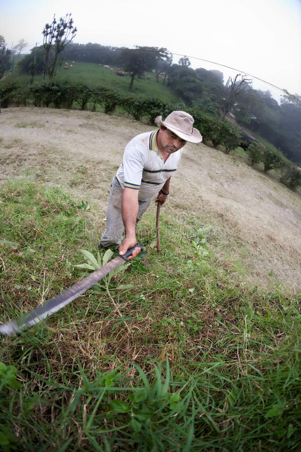 Download Costa Rican ranch hand stock image. Image of flora, land - 16044689