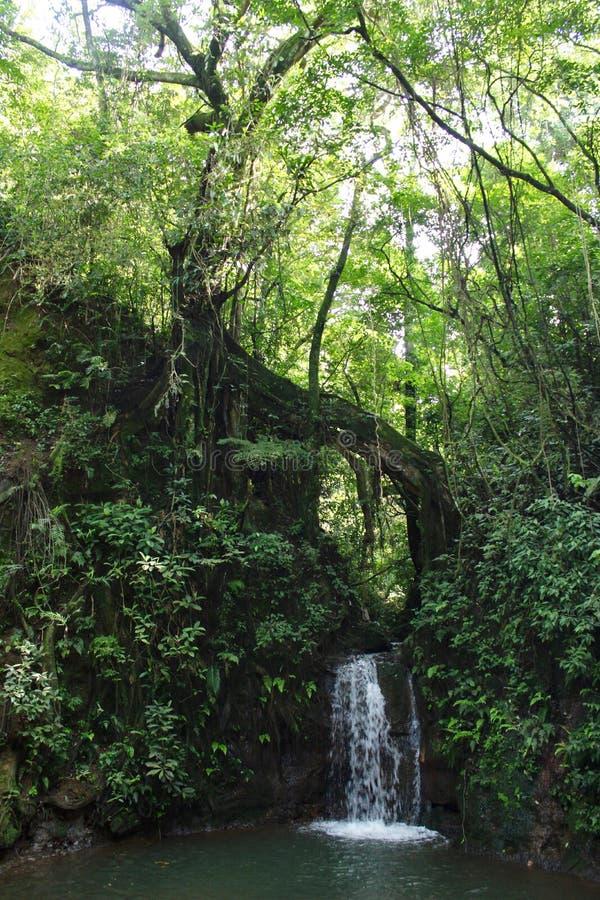 Costa Rican Warefall et piscine dans la forêt tropicale photo libre de droits