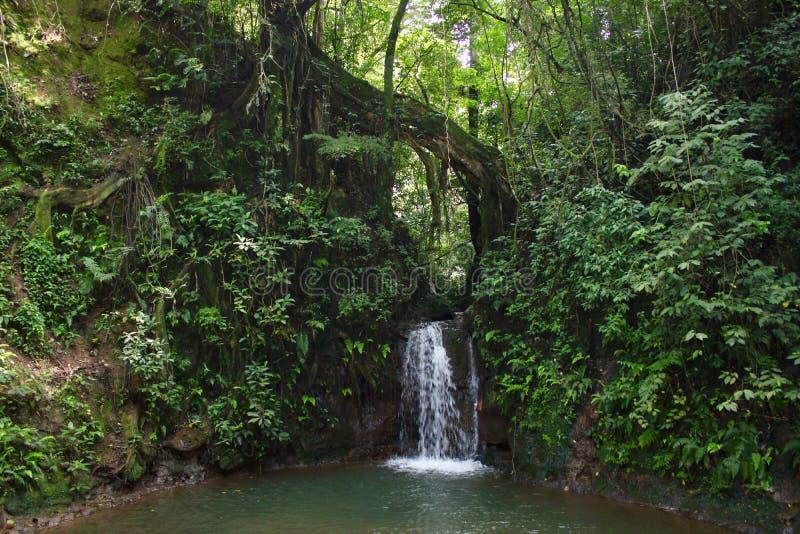 Costa Rican Warefall et piscine dans la forêt tropicale photographie stock