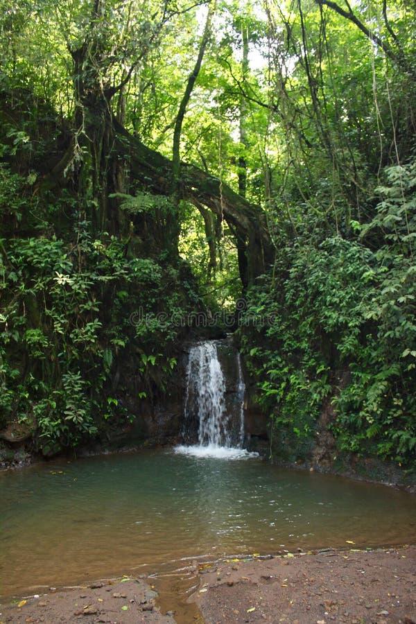 Costa Rican Waterfall et piscine dans la forêt tropicale photo libre de droits