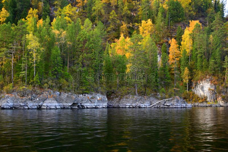 A costa rochosa do leste do lago Teletskoye, penhascos cobertos com uma floresta bonita a imagem foi tomada em um dia do outono imagens de stock royalty free