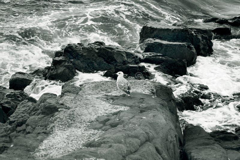 Costa rocosa fotografía de archivo