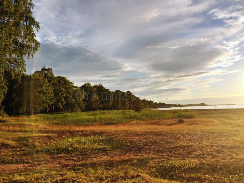 Costa sabbiosa del golfo di Finlandia con un'erba e un bordo bassi del legno su un tramonto fotografie stock libere da diritti