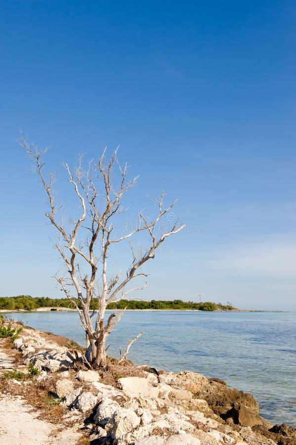 Costa y océano imagenes de archivo